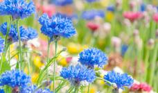 園芸・草花