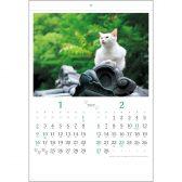 :猫さんぽ〔2か月玉〕